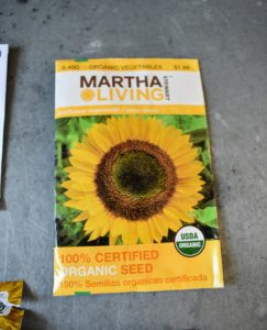 Here is a sunflower from one of my previous collections at The Home Depot - 'Sunflower Mammoth'. It has big blooms with cheerful bright yellow petals. It's among my favorites.