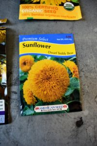 Premium Select's 'Dwarf Teddy Bear' sunflowers have unusual, cuddly-looking, four to five inch fully-doubled yellow flowers that are held up on sturdy dwarf plants that stand up to two and a half feet tall.