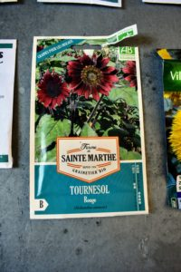 Another variety I purchased in France is this 'Tournesol Rouge' - bright red sunflowers.