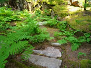 The exterior of Skylands abounds with stone step walkways and naturalized ferns of many types.