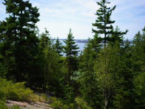 And through the trees is a beautiful summer view of Seal Harbor. Maine is so magical this time of year.