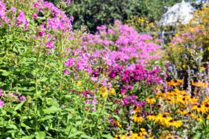 My flower cutting garden delights all who visit. It's filled with so many colorful blooms - pinks, yellows, blues. I hope your garden is also doing wonderfully this season.
