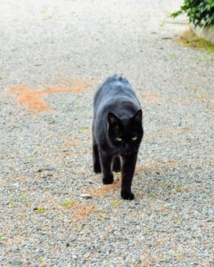 Blackie is well fed, healthy, and athletic - and, he keeps the vermin away.
