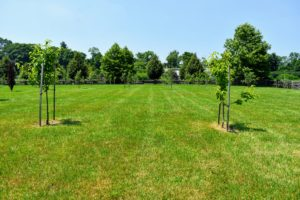 Fruit trees need a good amount of room to mature. When planting, be sure to space them at least 15-feet apart.