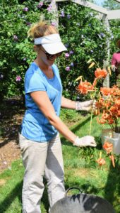 Once the lilies are cut, our gardening intern, Kayley Presby-Gaines, removes the foliage below the bloom.