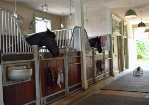 It's about to get quite busy down in my stable. My five Friesians, three donkeys and Fell pony are all waiting for a visit from their lay equine dentist.