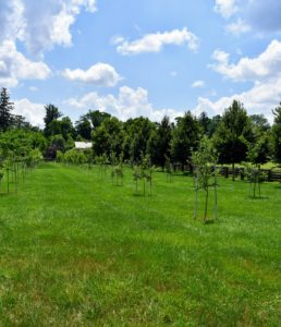 I am very fortunate to have such an expansive paddock space to grow all these trees. In another section, I have quince, apricots as well as sweet and sour cherries.