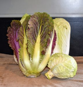 Look at this beautiful Chinese cabbage on the left. It is called 'Red Dragon' - with a full-sized 10-inch head and bright red to purple leaves, inside and out. Compared to green Napa types, its flavor is slightly stronger, but great for salads, stir-fries, and kimchee.