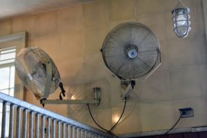 Each horse has a fan above its stall for air circulation.