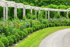 In early June, this pergola is usually filled with knee to waist high lily stems, with a few poppies and purple alliums.