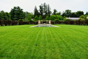 Here is a view of the pool surrounded by the striking beech hedge. I'm so proud of how this area has turned out.