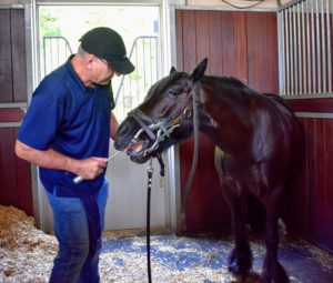 Over the years, power floating has become more popular than traditional hand filing, but this manual method is more natural and does not require anesthesia - just a knowledgeable practitioner and a trusting relationship between horse and dentist.