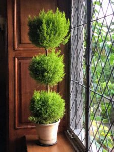 A nicely shaped topiary sits on this windowsill - I love how it catches the light through the leaded window.