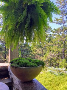 This is a view off the West Terrace with one of several Boston ferns hanging from the pergola above and a moss filled planter bowl below. During summer, we always fill several garden planters with moss and other natural elements. Once the season is over, we always make sure the moss we harvested is returned to the forest where it can regenerate and flourish.