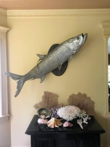 Some of you may know, I love examples of taxidermy. In the living room, the walls are painted a unique shade of yellow - a great backdrop for this giant mounted tarpon.