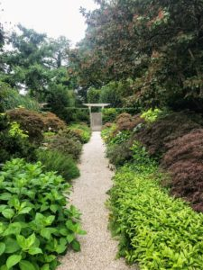Along this path, Japanese maples, lilies, shade loving plants and lots of large Cimicifuga. Look closely, and see how beautiful the Japanese maples and hostas look together with the lilyturf, Liriope.
