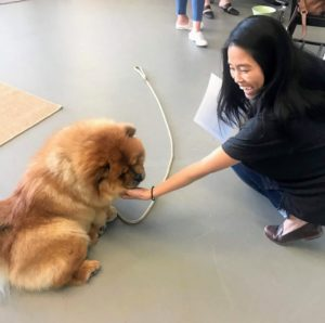 Here is our marketing manager, Ellie Lee, with Empress Qin - everyone always loves petting the dogs when they come to visit the office.