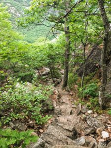 And this is the South Ridge Trail, a moderately steep climb to the summit of Dorr Mountain at 1270-feet. Throughout the hike there are a few areas where the trail becomes somewhat steep, but it's another fun ascent to the top.
