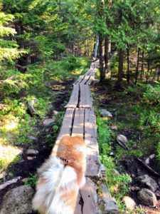 Jordan Pond serves as a wildlife habitat and provides water for nearby communities as well as Jordan Pond House. Here is Empress Qin leading the way along one of the wooden paths.
