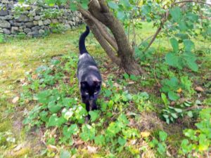 Everyone who visits knows Blackie - and if you call his name, he comes running.