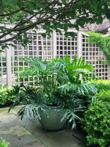 There are many large beautifully planted pots which surround the pool. The entire pool area is also surrounded by 12-foot high trellises original to my renovation of house.