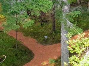 These pathways lead to my guest house, play house and main house. Each season, the outdoor grounds crew covers the meandering footpaths with pine needles - they add such charm to the woodland.