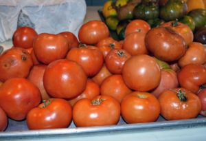 Many of the tomatoes are eaten fresh and used for sandwiches and salads. Another large batch is saved for making delicious sauce. These tomatoes are separated according to color – red, green, yellow, and orange.