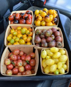 These cherry tomatoes are great snacks - I am sure they will go quickly.
