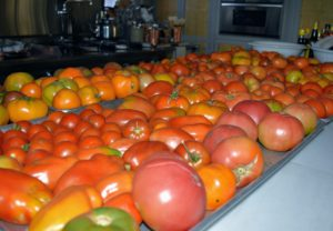 Once they're picked, the tomatoes are placed on my kitchen counter - I love seeing them all when I get home at the end of the day.