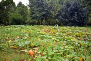Pumpkins grow on long vines, which means they take up a lot of space. I always plant my pumpkin patch in a roomy bed that can accommodate a large crop of big, colorful specimens. We have this large patch behind my main greenhouse and another down by the vegetable garden.