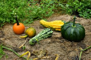 Here are two gourds with long necks and lots of warts.
