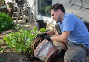 The other tree is for a vanilla orchid. The Vanilla orchid's blooms are large and can be white, cream, greenish-yellow, or light green in color. Here is Ryan removing it from its pot.