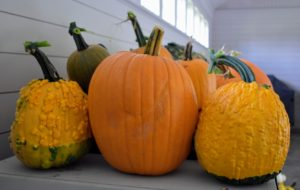 Look at all the different colors and shapes. Many are cultivated for their witch and goblin-like appearances, such as the two flanking this smooth pumpkin - the more warts the better.
