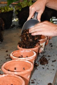 Here, Ryan begins to put some of the orchid mix into the bottom of the pots.