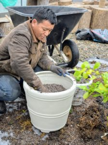 Phurba fills one pot with potting soil mixed right here at the farm. Citrus need well drained soil, so it is important to have the right potting mix that includes peat moss, perlite, vermiculite and nutrient-rich compost. We also add osmocote.