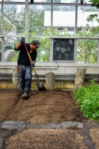 The soil in this greenhouse is about two-feet deep. Phurba uses a spade to shape the beds.