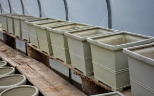 These planters can be used indoors and out - the size is just perfect for my citrus trees.