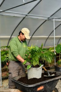 While plants are being brought inside, Chhewang stands by to repot. Here he is repotting a plant into one of my Basket Weave planters from QVC. This crew has gone through this process many times and gets the job done efficiently and quickly.