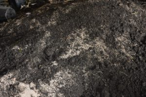 This medium is made right here at my farm with composted manure from my Friesians. Composting manure above 131-degrees Fahrenheit for at least a couple weeks kills harmful pathogens, dilutes ammonia, stabilizes nitrogen, kills weed seeds and reduces any objectionable odors.