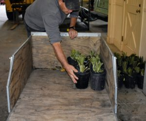 Carlos also uses a wheelbarrow to transport these cuttings to their temporary home.