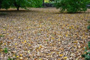 One clear indication that autumn has arrived is the massive amount of leaves - there are leaves everywhere.