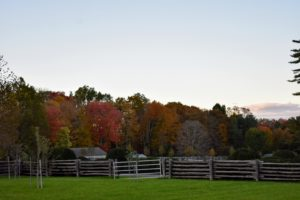 At my farm I planted many different types of trees in hopes that they would shade, provide climate control, and change color at different times, in different ways. Here is some of the early autumn color seen across one of my paddocks.