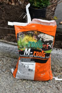A good fertilizer made especially for new plantings should always be used. This is M-Roots with mycorrhizal fungi, which helps transplant survival and increases water and nutrient absorption.