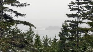 Beyond the terrace and through the trees, you can see Sutton's Island. On this day, the ocean is not too choppy but quite foggy. It looks very different in summer when it's filled with boats. These spruce trees are among my favorite at Skylands - so tall and majestic.