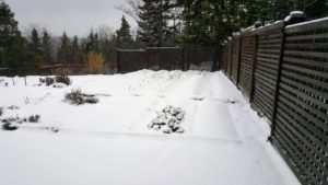 And here is the lattice-fenced flower cutting garden - it's really buried, but you can still make out the formed garden beds in the snow.
