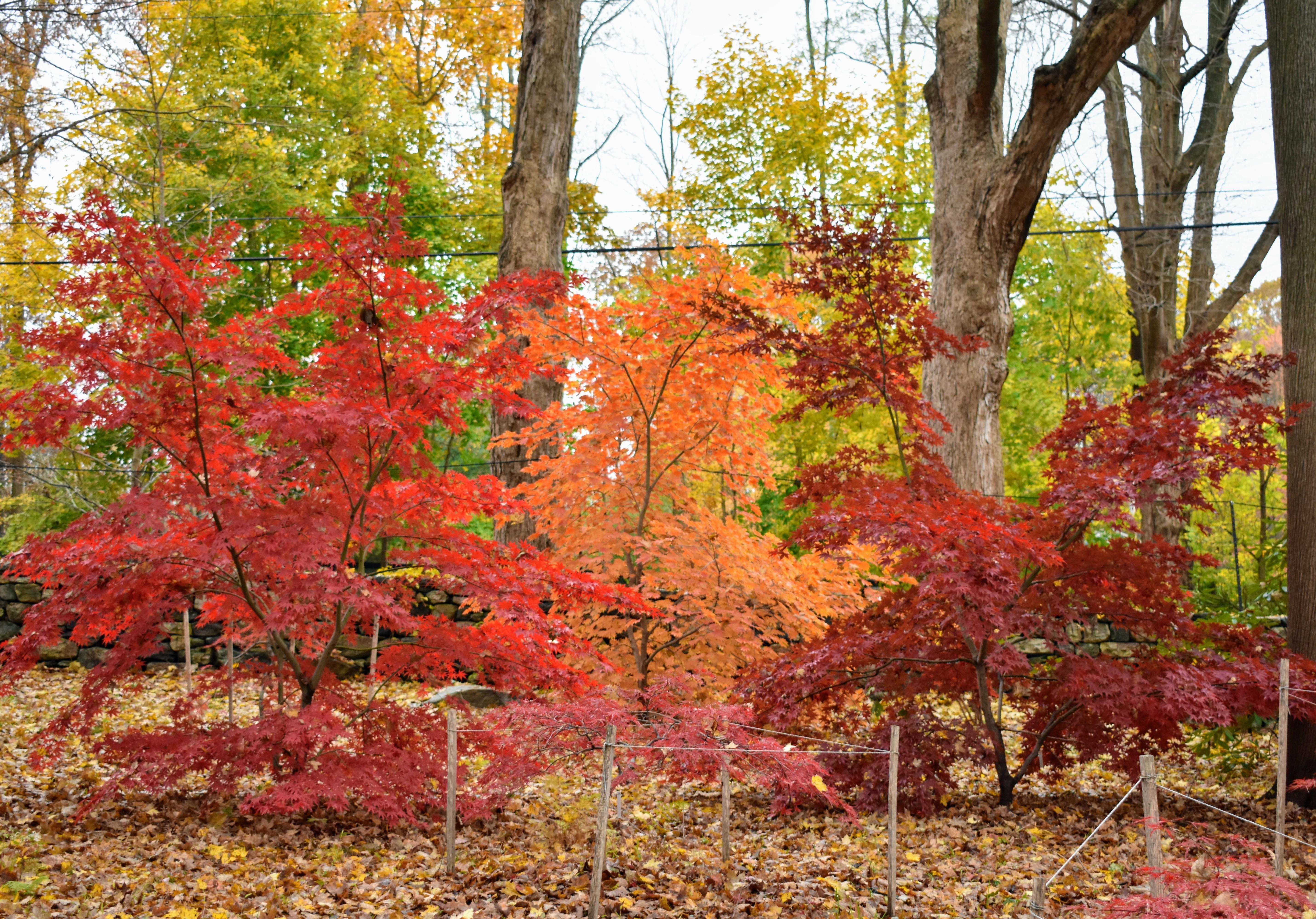 The Martha Stewart Blog Blog Archive My Colorful Japanese