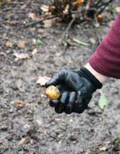Some bulbs are small and easier to plant. Every bulb needs food and good soil to thrive and multiply.