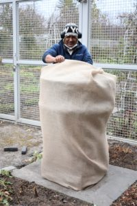 Pete moves to the urns at the front of my flower cutting garden. There is a lot of tucking involved, and a lot of stitching and knotting, but my crew has been covering these containers with burlap every year for quite some time - they are all excellent burlap sewers.