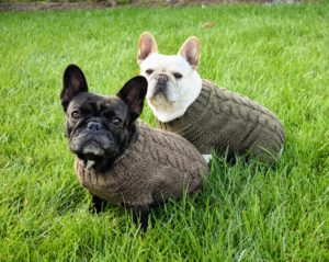 Bete Noir and Creme Brulee love their sweaters and often use them when walking around the farm on chilly mornings.