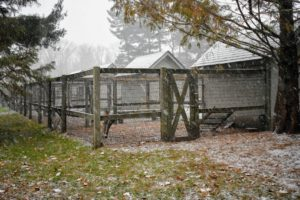 The chicken yard is empty - all of my chickens are tucked in for the duration of the storm.